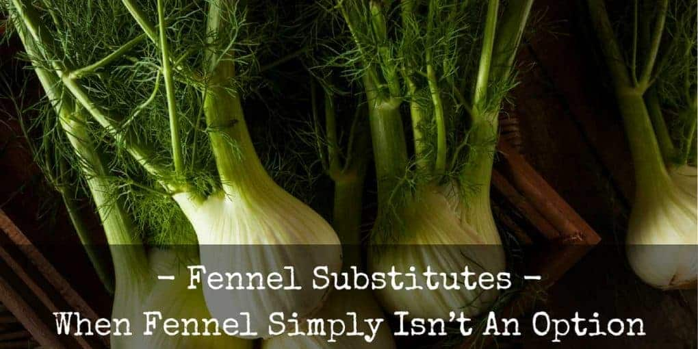 Fennel Substitute 1020x510