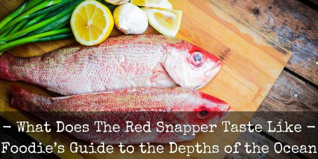What Does Red Snapper Taste Like 1020x510