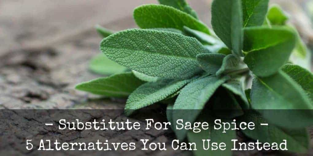 Substitute For Sage Spice 5 Alternatives You Can Use Instead
