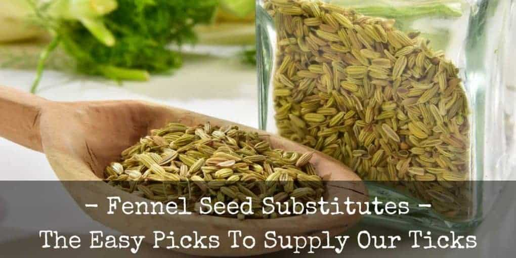 Fennel Seed Substitute 1020x510