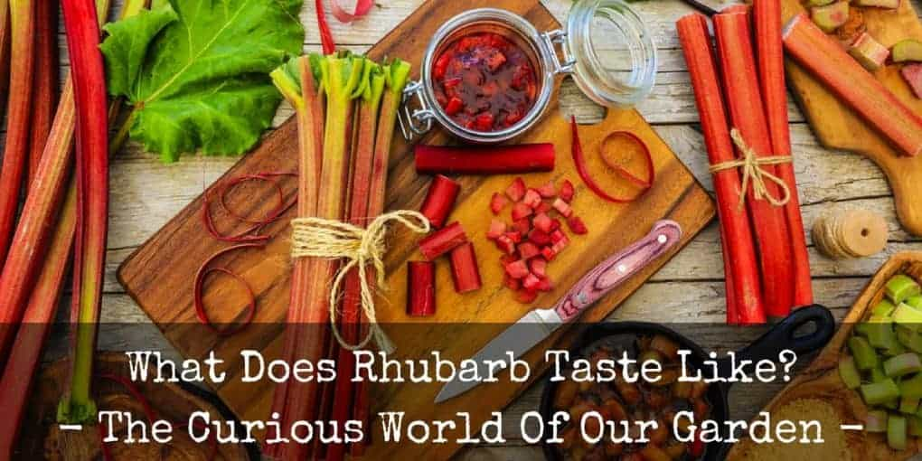 What Does Rhubarb Taste Like 1020x510
