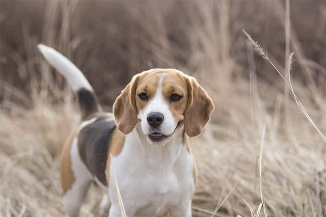 Perfect Hunting Dog Names in 2019 - MerchDope
