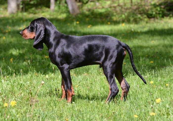 Hunting Dog Breeds Merchdope
