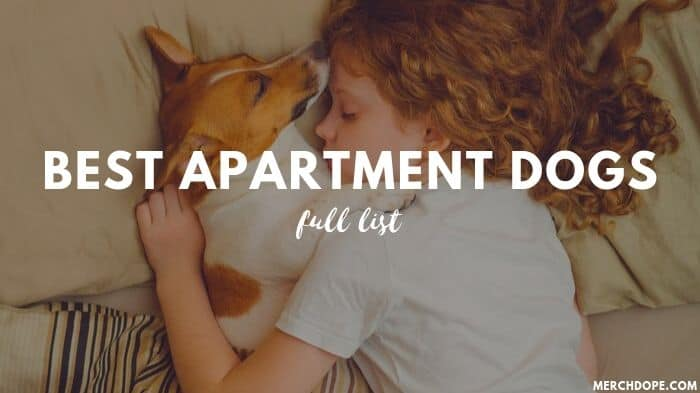 Best Apartment Dogs
