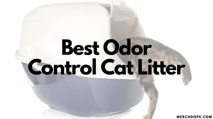 Best Odor Control Cat Litter