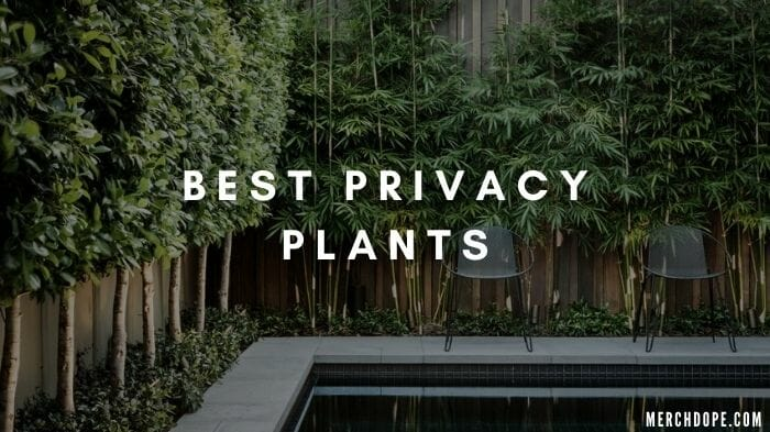 best privacy plants