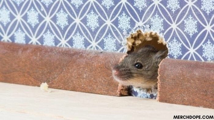 how to deal with mice in the walls