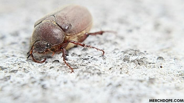 how to get rid of june bugs